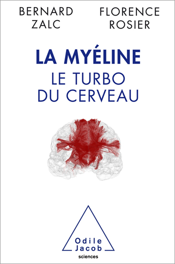 Myelin - Turbocharging The Brain